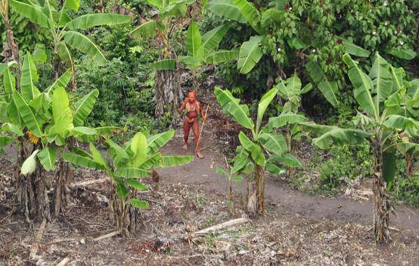 Letícia Sabatella e Wagner Moura lançam campanha global pelas tribos isoladas
