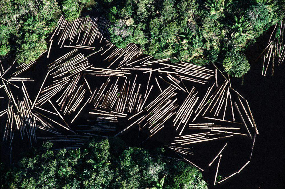 Declaration of Civil Society Organizations on the Crisis of Deforestation and Burning in the Brazilian Amazon
