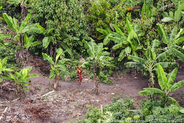 Funai exonera coordenador de índios isolados e indigenistas repudiam interferência ideológica