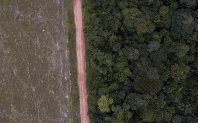 Organizações reivindicam ao Governo Federal plano emergencial de combate ao desmatamento