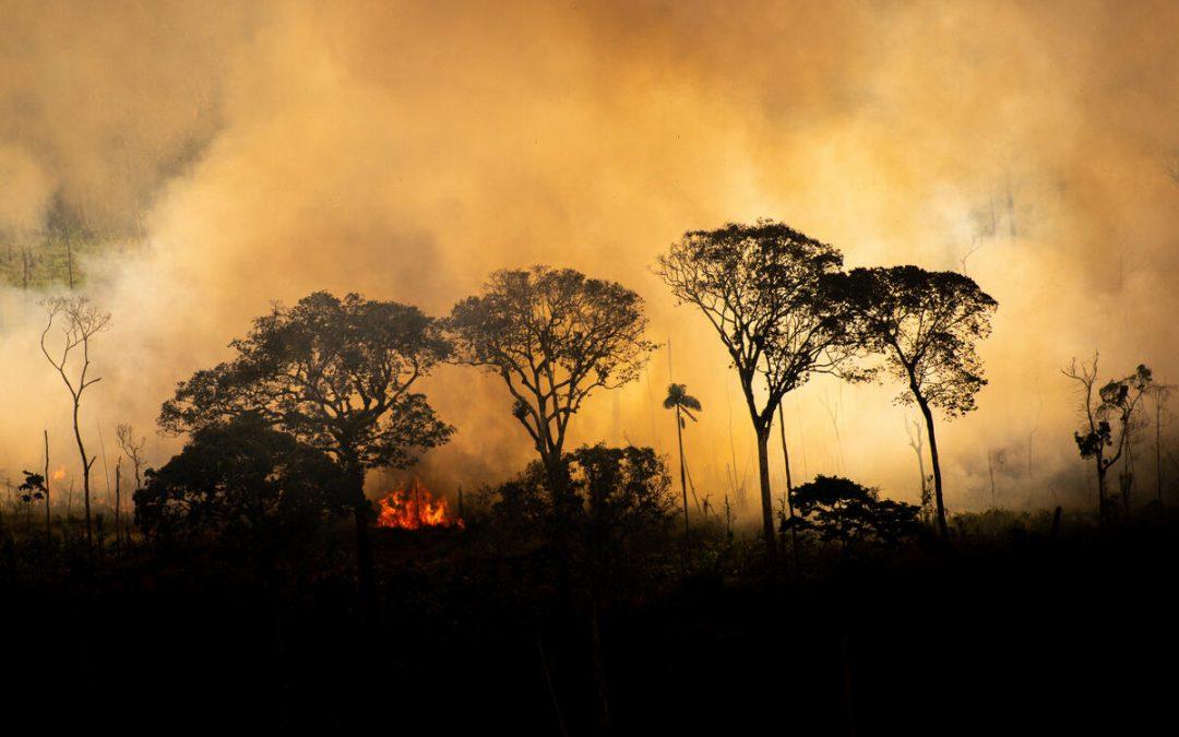 Indígenas da Amazônia realizam coletiva virtual sobre ações contra gigante supermercadista Casino/Pão de Açúcar