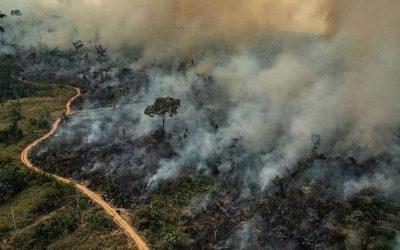 Coalizão Florestas & Finanças alerta investidores estrangeiros sobre risco da pauta antiambiental no Congresso brasileiro